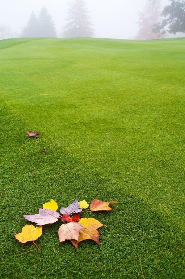 ulistnienie zieleń zdjęcie royalty free