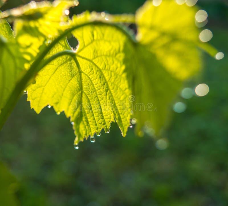 Ulistnienie zieleń fotografia royalty free