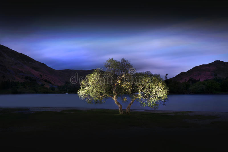 Ullswater Tree. A lone tree on the shore of Ullswater Lake in England's Lake District. The tree was lit over a long exposure by a single torch. Unless otherwise royalty free stock images