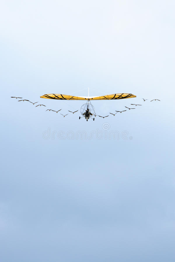 Ulm and bird in the sky royalty free stock photo