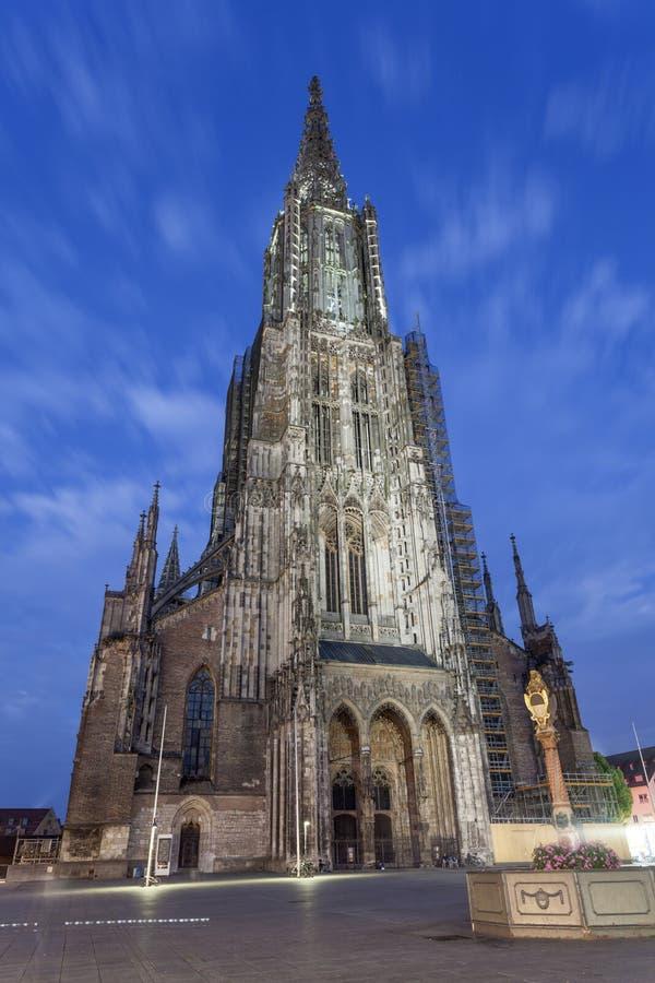 Ulm Munster nachts, Deutschland stockfotografie