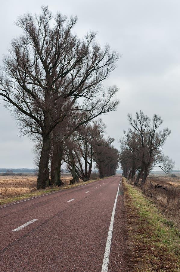 Ulmen-Allee am Rand der Straße im wolkigen Wetter lizenzfreie stockfotografie