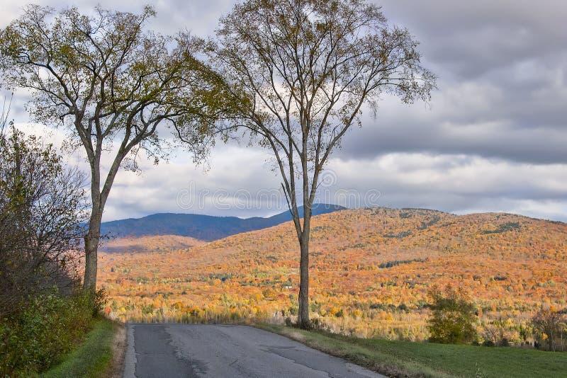 Ulmenbäume von Amerika, die zwei Wächter des Eingangs lizenzfreies stockbild