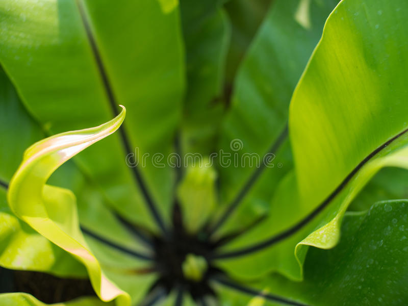 Ulotka Aspleniaceae zieleni paproć zdjęcia royalty free