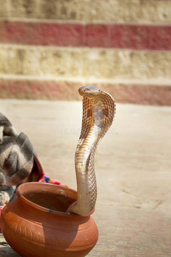 Ultimo ammaliatore di serpente (Bede) da Benares fotografie stock