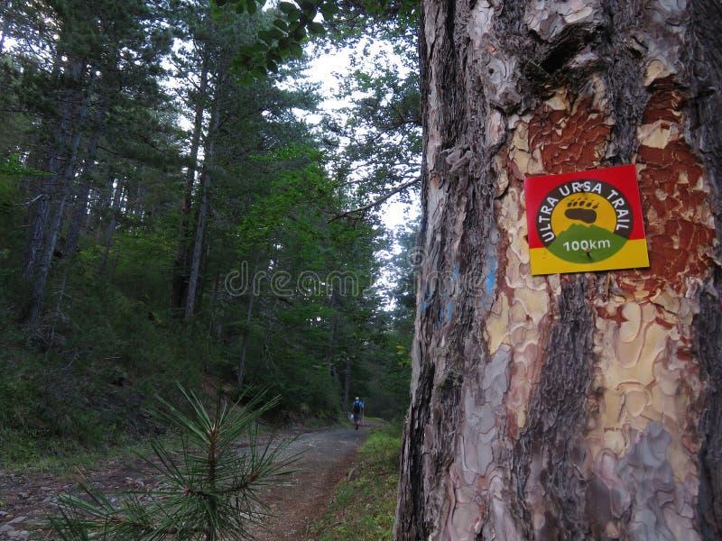 Ultra fuga do ursa, parque nacional dos pindos foto de stock royalty free