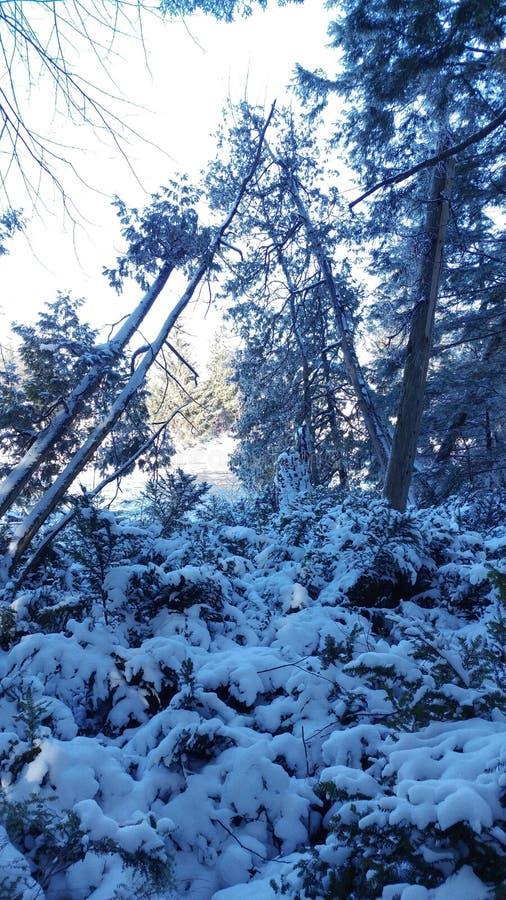 Ultra koude de winterdag royalty-vrije stock afbeelding