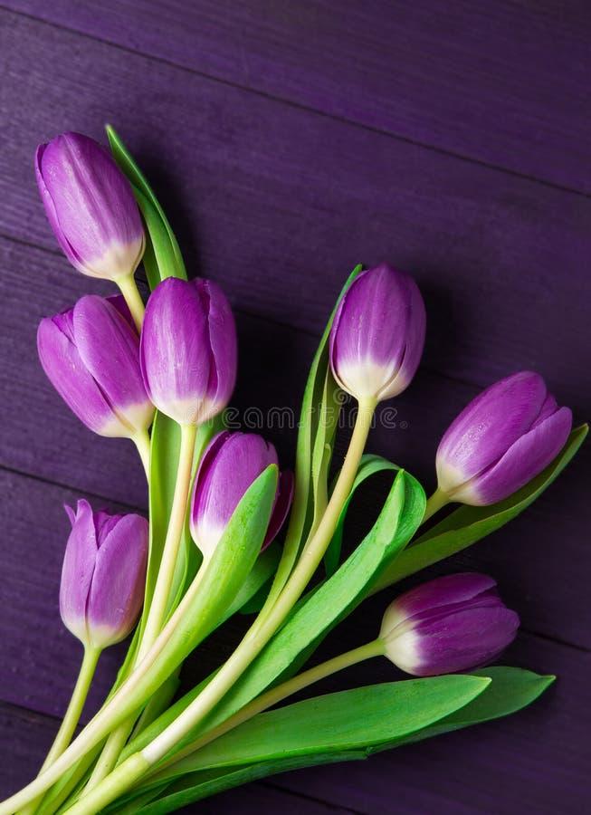 Ultra Violet Tulips på ultra Violet Background royaltyfri bild