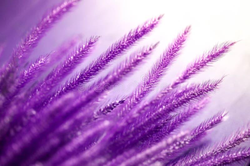 Ultra violet wild flower in garden under sunlight,abstract natural background concept. stock photos