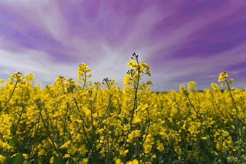 Ultrafioletowy niebo nad wsią fotografia stock