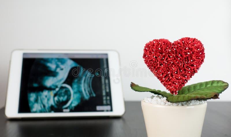 Ultrasone klank op tablet met het kweken van hartbloem die wordt afgetast stock afbeeldingen