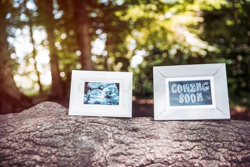 Ultrasuono del bambino e venire presto strutture della foto sul tronco di albero in FO immagini stock