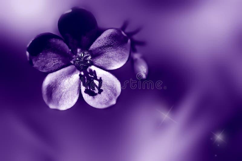 Ultraviolette bloemenachtergrond Bloem en Knop Modieuze kleur van 2018 royalty-vrije stock afbeelding
