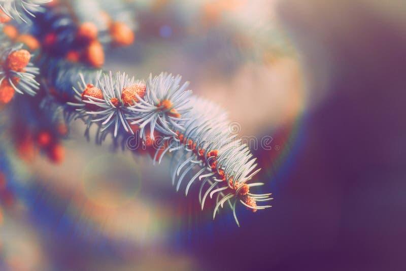 Ultraviolette purpere natuurlijke geweven achtergrond in Kleur van het Jaar 2018 Blauwe nette Kerstboomtakken duotoned, samenvatt royalty-vrije stock foto's