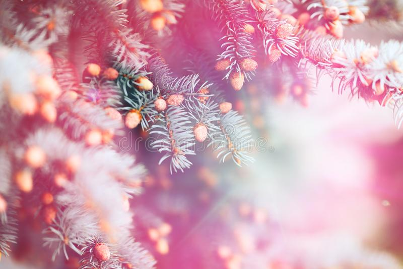 Ultraviolette purpere natuurlijke geweven achtergrond in Kleur van het Jaar 2018 Blauwe nette Kerstboomtakken duotoned, samenvatt royalty-vrije stock afbeeldingen