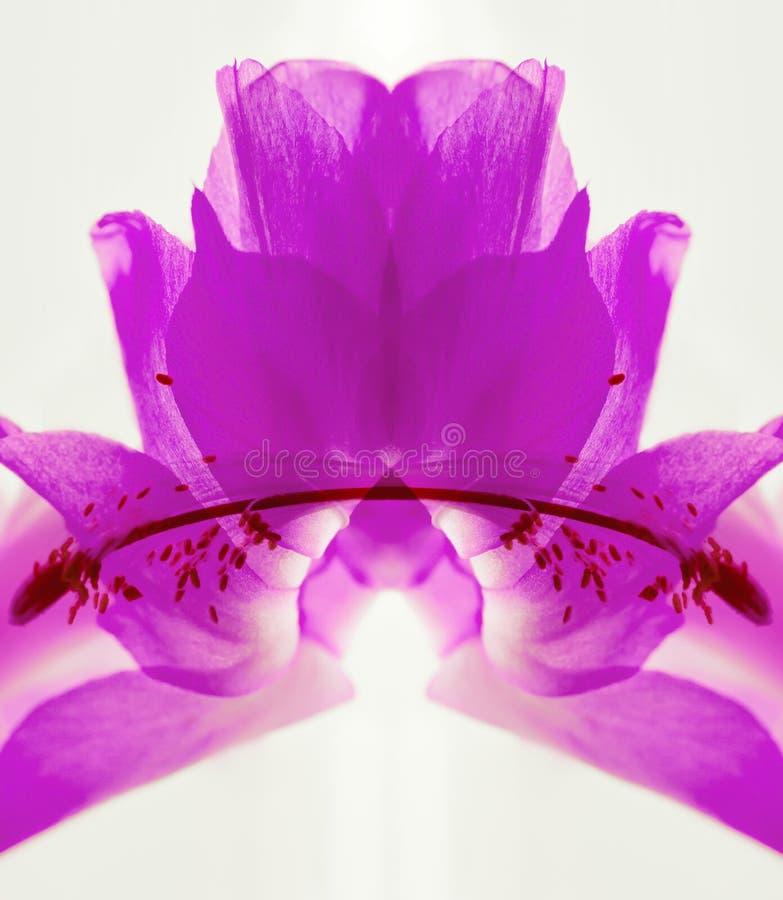 Ultraviolette Samenvatting van Cactusbloem stock foto's