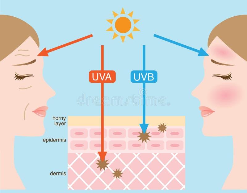 Ultravioletto A e B ultravioletta illustrazione di stock