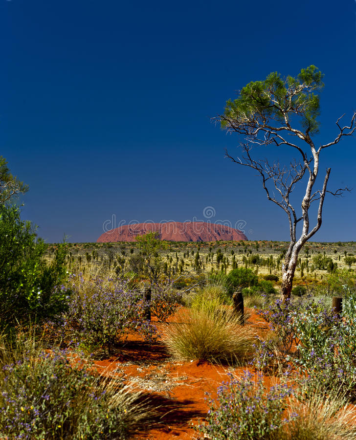 Uluru (Ayers Rock). Uluru-Kata Tjuta National Park is the location of a world-renowned sandstone monolith, which stands 348 metres in height and bears various stock photos