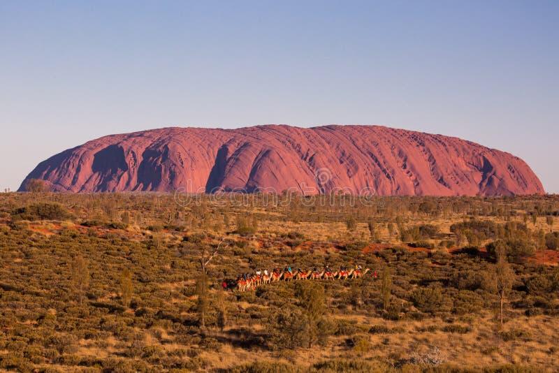Uluru на заходе солнца с верблюдами стоковая фотография rf