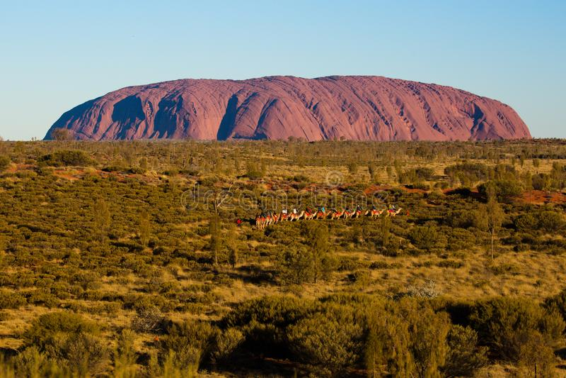 Uluru на заходе солнца с верблюдами стоковые фотографии rf
