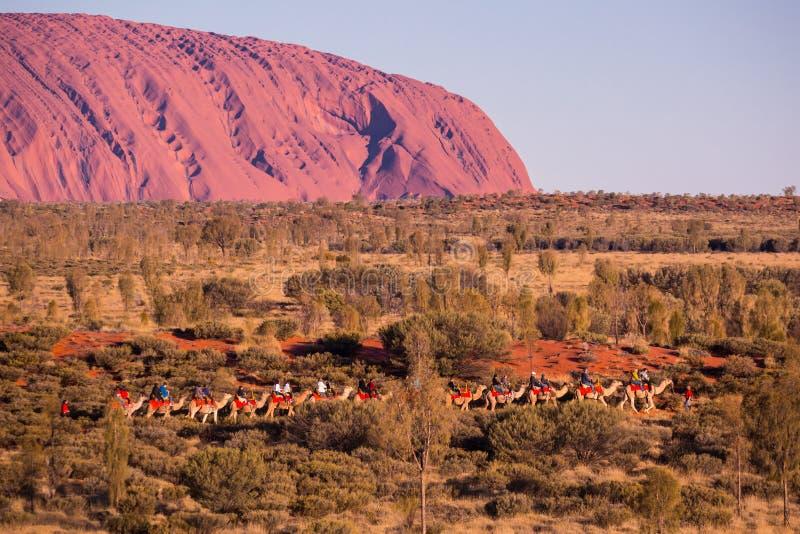 Uluru на заходе солнца с верблюдами стоковое фото rf
