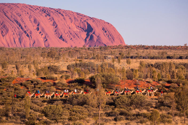 Uluru al tramonto con i cammelli fotografia stock libera da diritti
