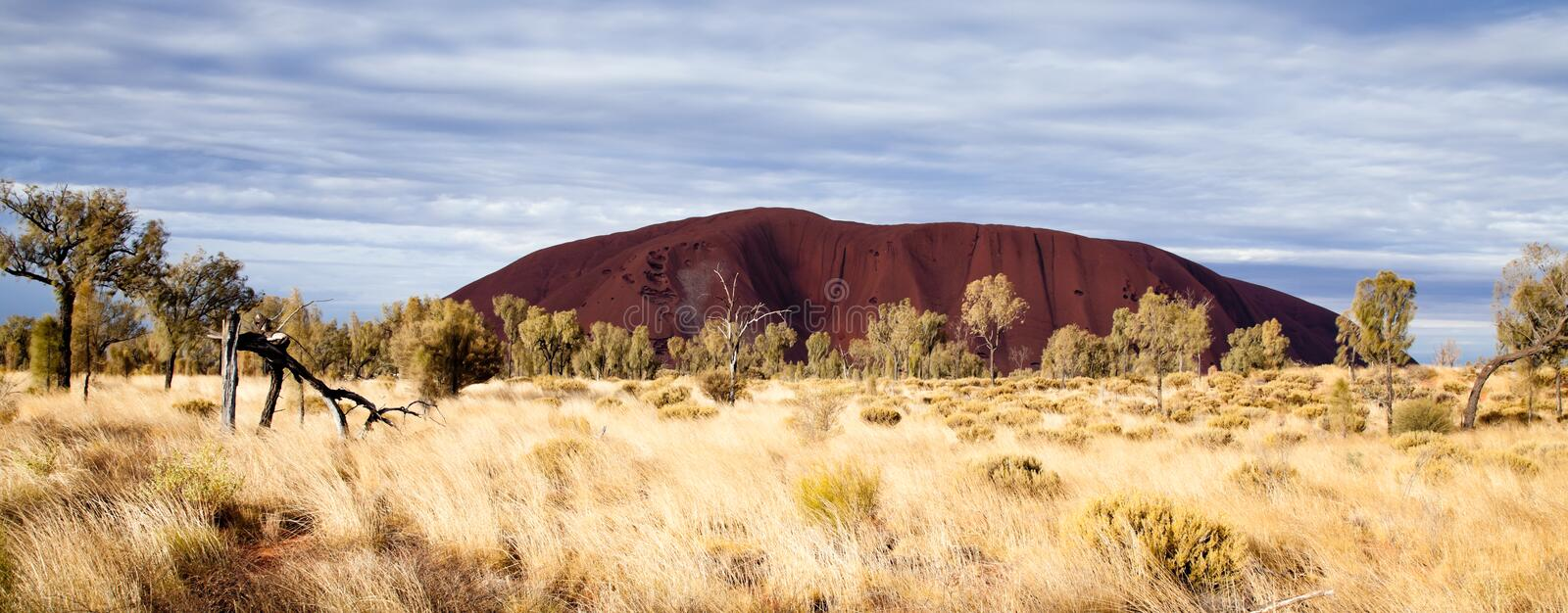 Uluru - Ayers Rock. Aboriginal sacred place. UNESO world heritage. Afternoon sun is color painting red sandstone rock royalty free stock photos