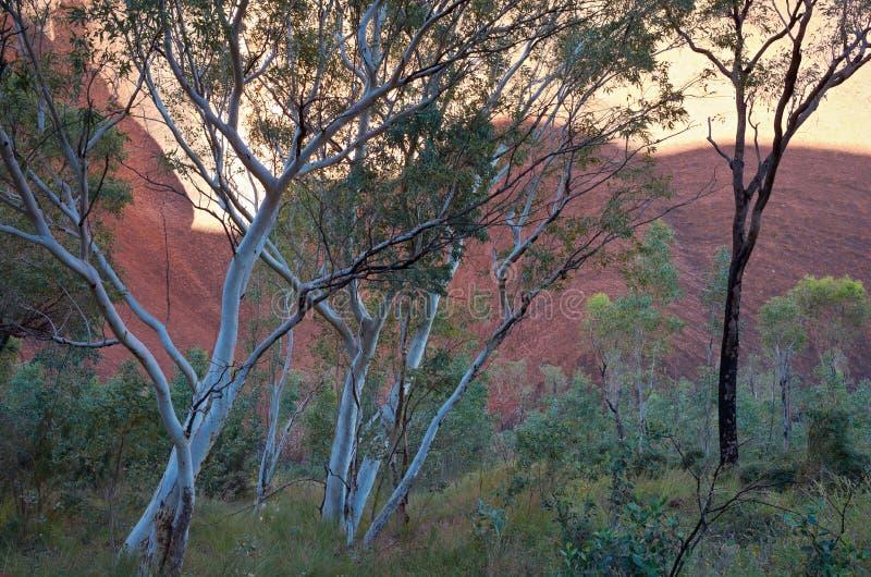 Uluru e flora do deserto imagens de stock