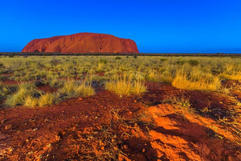 Uluru vid blå timme royaltyfri bild