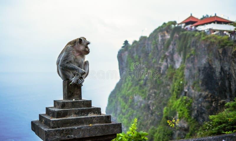 Uluwatu, Bali, Indonesia Scimmia fotografia stock libera da diritti