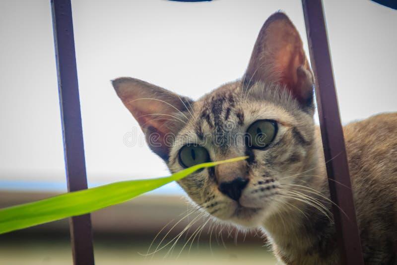 Um íon disperso desabrigado abandonado do gato a parede e a espera de limite a roubar para o alimento Gato cinzento assustador, d fotografia de stock royalty free