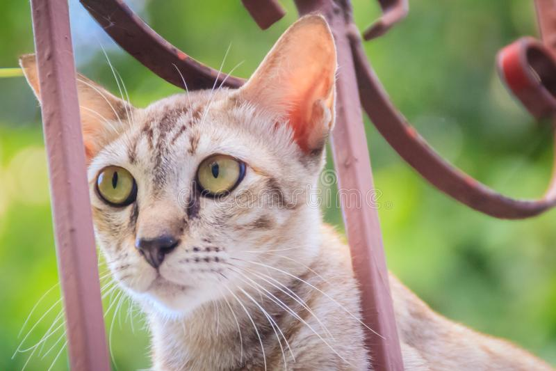 Um íon disperso desabrigado abandonado do gato a parede e a espera de limite a roubar para o alimento Gato cinzento assustador, d foto de stock royalty free