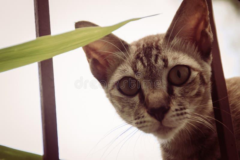 Um íon disperso desabrigado abandonado do gato a parede e a espera de limite a roubar para o alimento Gato cinzento assustador, d imagens de stock