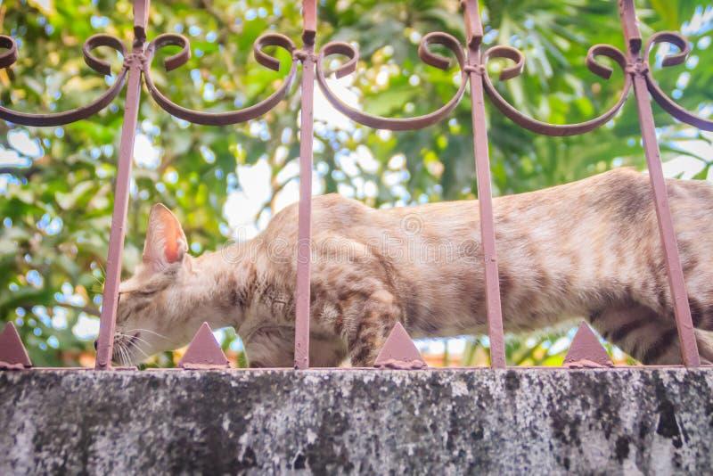 Um íon disperso desabrigado abandonado do gato a parede e a espera de limite a roubar para o alimento Gato cinzento assustador, d imagem de stock royalty free