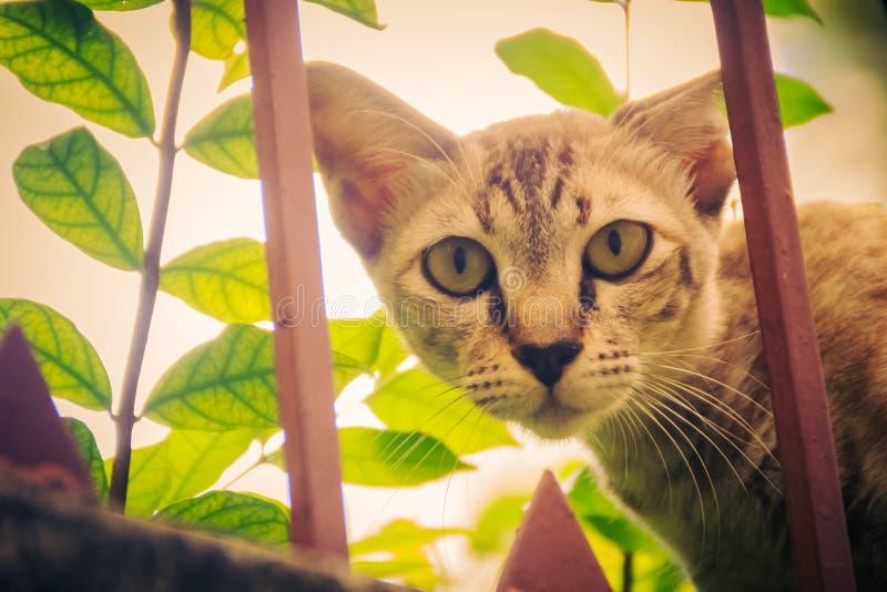 Um íon disperso desabrigado abandonado do gato a parede e a espera de limite a roubar para o alimento Gato cinzento assustador, d imagem de stock