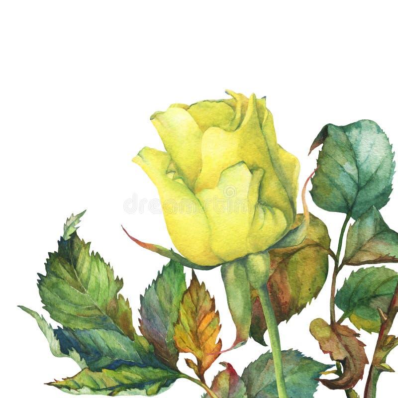 Um único da rosa dourada bonita do amarelo com folhas verdes ilustração stock