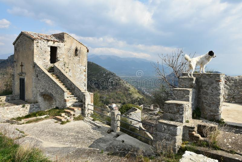 Um amigo fiel nas ruínas de um castelo abandonado fotos de stock royalty free