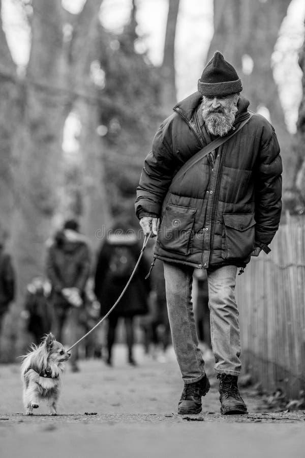 Um ancião que anda seu cão no parque em uma exposição de cães fotografia de stock