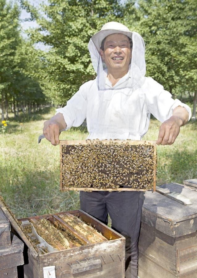 Um apicultor chinês do homem sênior imagens de stock