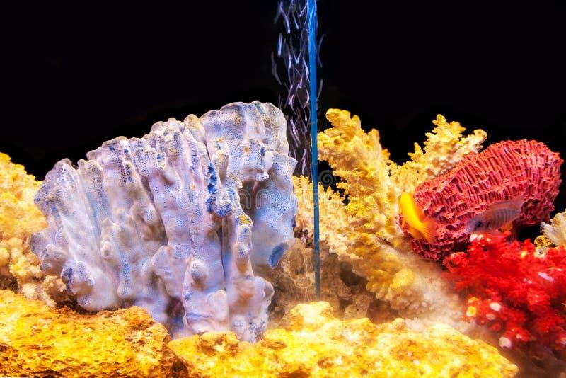 Um aquário home com peixes exóticos e corais coloridos imagens de stock