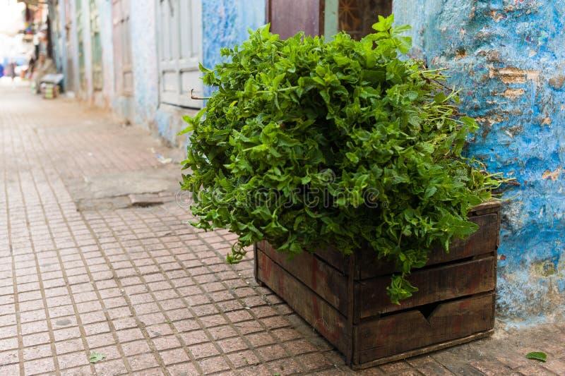 Um arbusto da hortelã fresca, doce em uma caixa de madeira foto de stock