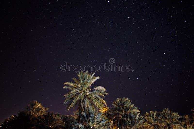 Um astrophotography bonito com as palmeiras no primeiro plano fotografia de stock royalty free