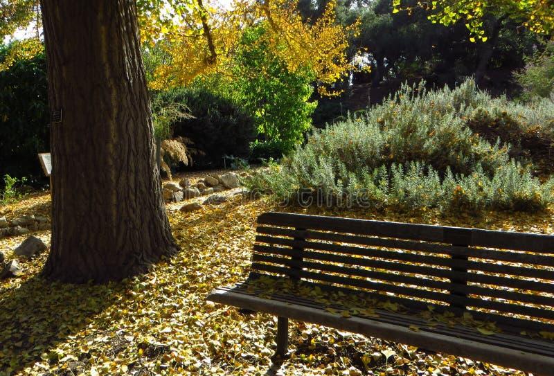 Um banch nas folhas amarelas fotos de stock