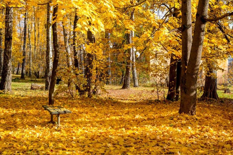 Um banco no meio da folha amarela caída, outono dourado bonito imagens de stock royalty free