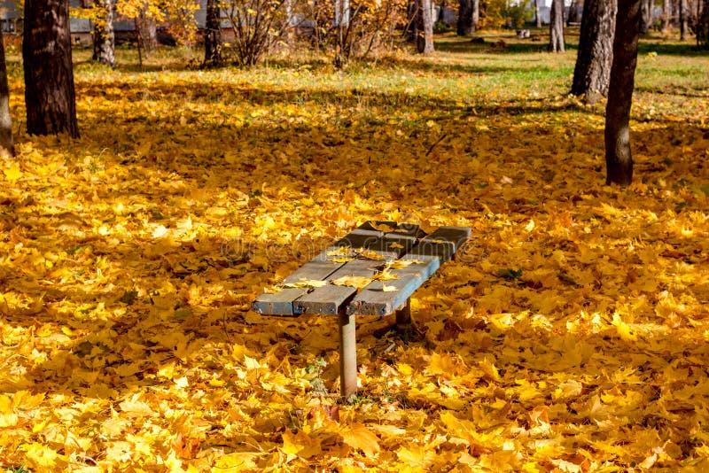 Um banco no meio da folha amarela caída, outono dourado bonito fotos de stock royalty free