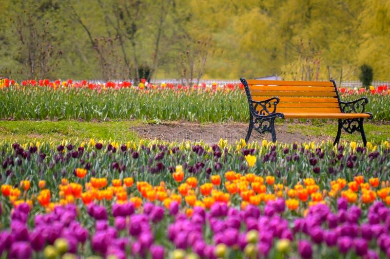 Um banco no meio do ` s em segundo - Tulip Garden a maior do mundo em Kashmir imagem de stock royalty free