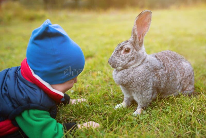 Um bebê está jogando com uma lebre cinzenta grande na grama verde O rapaz pequeno alimenta o coelho vivo imagem de stock