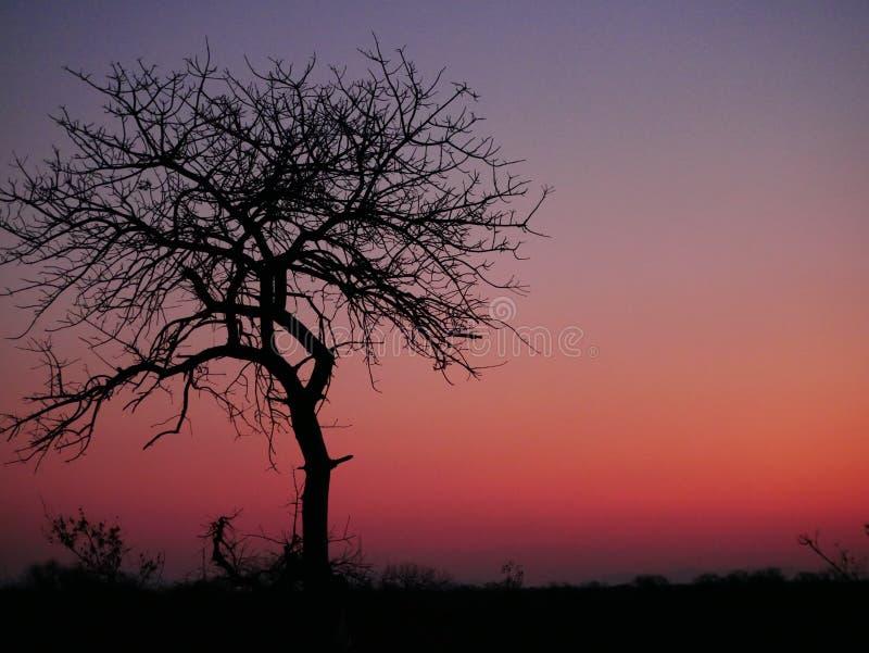 Um belo pôr do sol vermelho no Parque Nacional de Kruger na África do Sul foto de stock