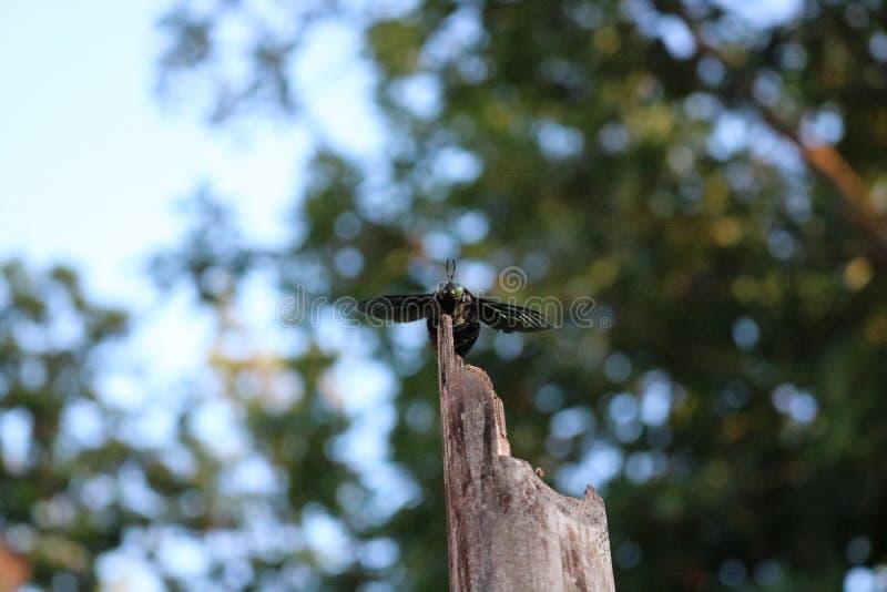 Um besouro em um tronco fotografia de stock