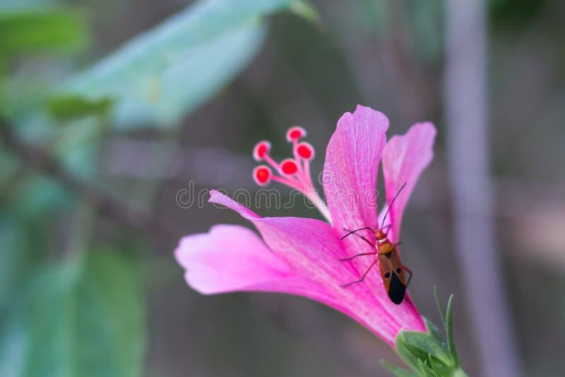 Um besouro em uma flor imagens de stock